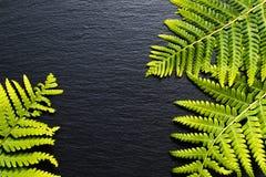 Vanno le felci verdi del fondo vanno sul fondo nero della pietra dell'ardesia Fotografie Stock
