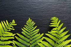 Vanno le felci verdi del fondo vanno sul fondo nero della pietra dell'ardesia Immagine Stock
