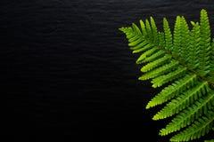 Vanno le felci verdi del fondo vanno sul fondo nero della pietra dell'ardesia Immagini Stock Libere da Diritti