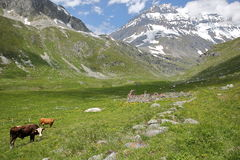 VANOISE, FRANCE:从有重创的Casse山顶的在背景中,北阿尔卑斯Entre-Deux-Eaux避难所环境美化 免版税库存图片