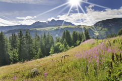 Vanoise National Park. Fine views of flowers in the Vanoise National Park Royalty Free Stock Photo