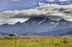 Vanoise National Park. Fine views of flowers in the Vanoise National Park Stock Image