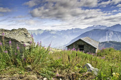 Vanoise National Park. Fine views of flowers in the Vanoise National Park Royalty Free Stock Photos