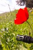Vapen mot färgrika blommor och att välja mellan fred eller kriget Begrepp: stoppa konflikten, känn världsskönheten Arkivbilder