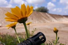 Vapen mot färgrika blommor och att välja mellan fred eller kriget Begrepp: stoppa konflikten, känn världsskönheten Arkivbild