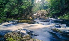 Vapor da floresta Foto de Stock Royalty Free