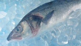 Vapor helado sobre tiro móvil de los pescados metrajes