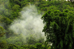 Vapor na floresta Foto de Stock Royalty Free