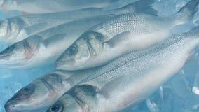 Vapor sobre pescados en tiro móvil del hielo almacen de video