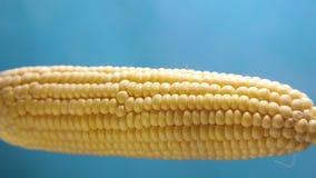 Vapore bollito saporito del cereale su un fondo blu archivi video