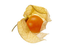Vaporous physalis Stock Photography