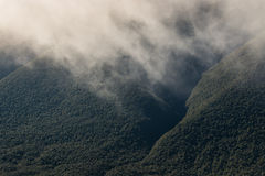 Vapour rising from rainforest Stock Photos
