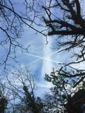 Vapour trails and trees. Trees surrounding vapour trees Royalty Free Stock Image