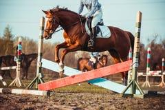 Vaqueira e cavalo Imagem de Stock