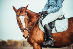 Vaqueira e cavalo Foto de Stock Royalty Free