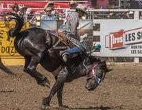 Vaqueiro do rodeio no mau bocado de A Fotos de Stock Royalty Free