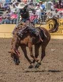 Vaqueiro do rodeio no mau bocado de A Fotos de Stock