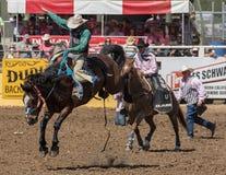 Vaqueiro do rodeio no mau bocado de A Foto de Stock