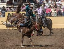 Vaqueiro do rodeio no mau bocado de A Fotografia de Stock