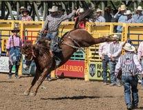 Vaqueiro do rodeio no mau bocado de A Fotografia de Stock Royalty Free