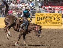 Vaqueiro do rodeio no mau bocado de A Imagem de Stock Royalty Free