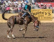Vaqueiro do rodeio no mau bocado de A Imagens de Stock Royalty Free