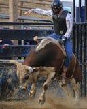 Vaqueiro do rodeio que monta um touro Fotografia de Stock
