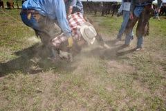 Vaqueiro que luta com um boi lassoed fotos de stock