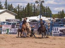 Vaqueiro que tenta aferrar-se a um cavalo selvagem Imagens de Stock