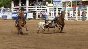 Vaqueiros do rodeio - luta romana do boi de Bulldogging no movimento lento - grampo 9 de 9 vídeos de arquivo