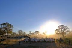 Vaqueiros irreconhecíveis na exploração agrícola com sinal Fazenda Paraiso - texto português da exploração agrícola de Paradise,  fotos de stock