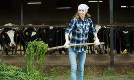Vaquera joven que recoge la hierba para las vacas Foto de archivo