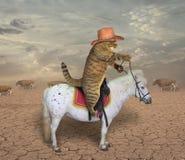 Vaquero del gato en un caballo 2 fotografía de archivo