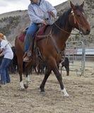 Vaquero en cuerda de tracción del caballo Foto de archivo libre de regalías