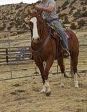 Vaquero en el caballo que lleva a cabo la cuerda Foto de archivo