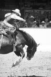 Vaquero en rodeo Imagen de archivo libre de regalías