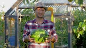 Vaquero Man In Hat del retrato que sostiene una sandía madura en fondo del invernadero metrajes