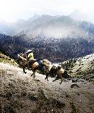 Vaquero que cruza las altas tierras stock de ilustración