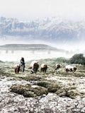 Vaquero que mira la manada en invierno imagenes de archivo