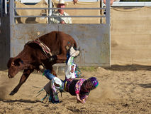 Vaquero que pierde su asiento en el toro imagen de archivo libre de regalías