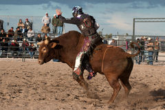 Vaquero Rodeo Bull Riding Imagenes de archivo