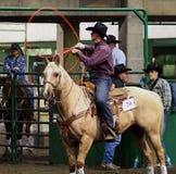 Vaquero Roping On Horseback del becerro Fotografía de archivo libre de regalías