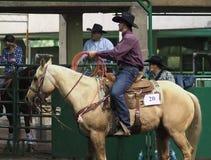 Vaquero Roping On Horseback del becerro fotografía de archivo