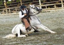 Vaquero suramericano en caballo andaluz Foto de archivo libre de regalías