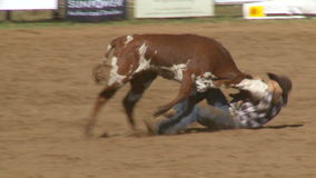 Vaqueros del rodeo - buey de Bulldogging que lucha en la cámara lenta - clip 1 de 9 almacen de metraje de vídeo