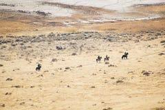 Vaqueros que montan a lo largo de rastros de la isla del antílope fotos de archivo