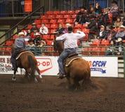 Vaqueros Roping del becerro a caballo Fotos de archivo libres de regalías