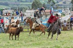 Vaqueros roping un toro en un rodeo rural en Ecuador Fotos de archivo