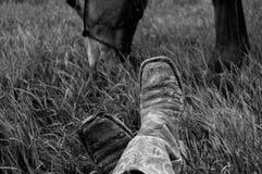Vaqueros y potros Foto de archivo