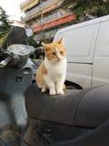 Vaquinha da motocicleta imagem de stock royalty free